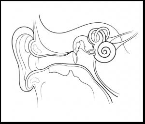 Diagream of the inner ear